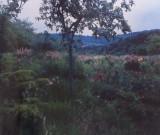 M Chaudin's Garden